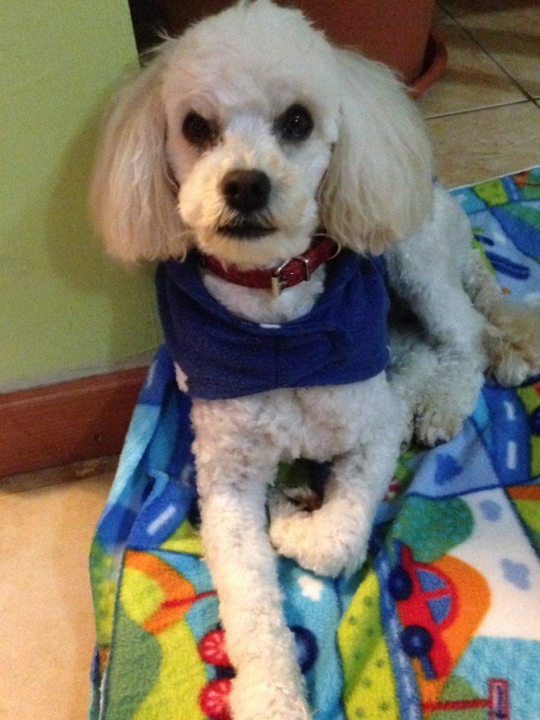 Nicol estilo perrito - 4 1