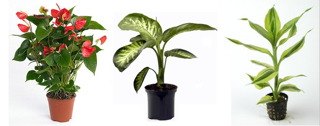 Estas son las plantas que debes tener en tu casa para - Plantas venenosas de interior ...
