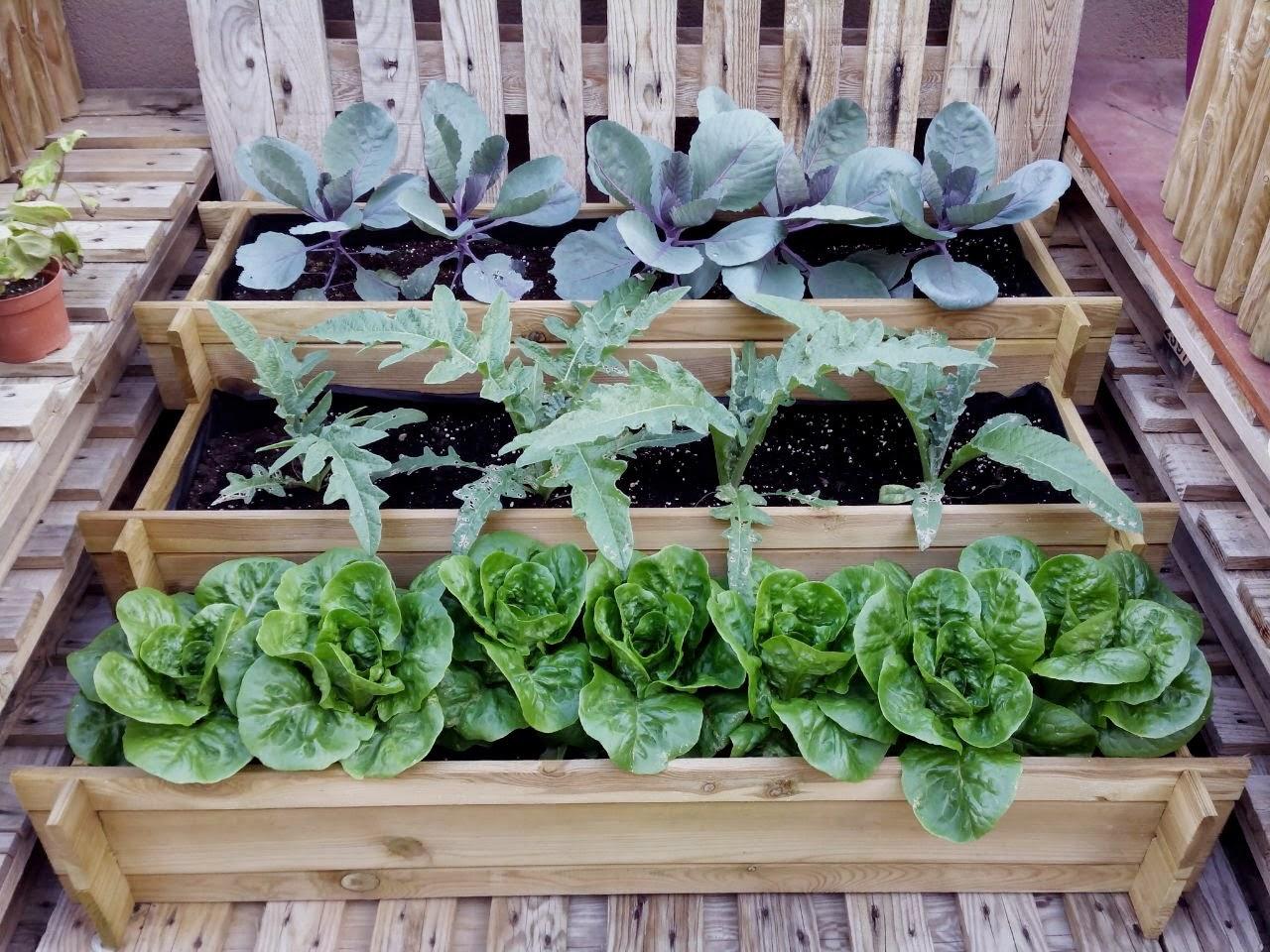 Fmdos cl haz tu propio huerto cultiva tus alimentos y - Tu huerto en casa ...