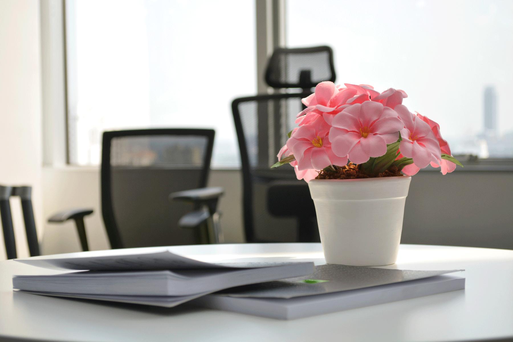 Tienes plantas en tu oficina conoce los grandes - Plantas oficina ...