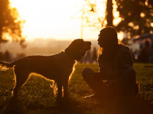 Amor por tu perro