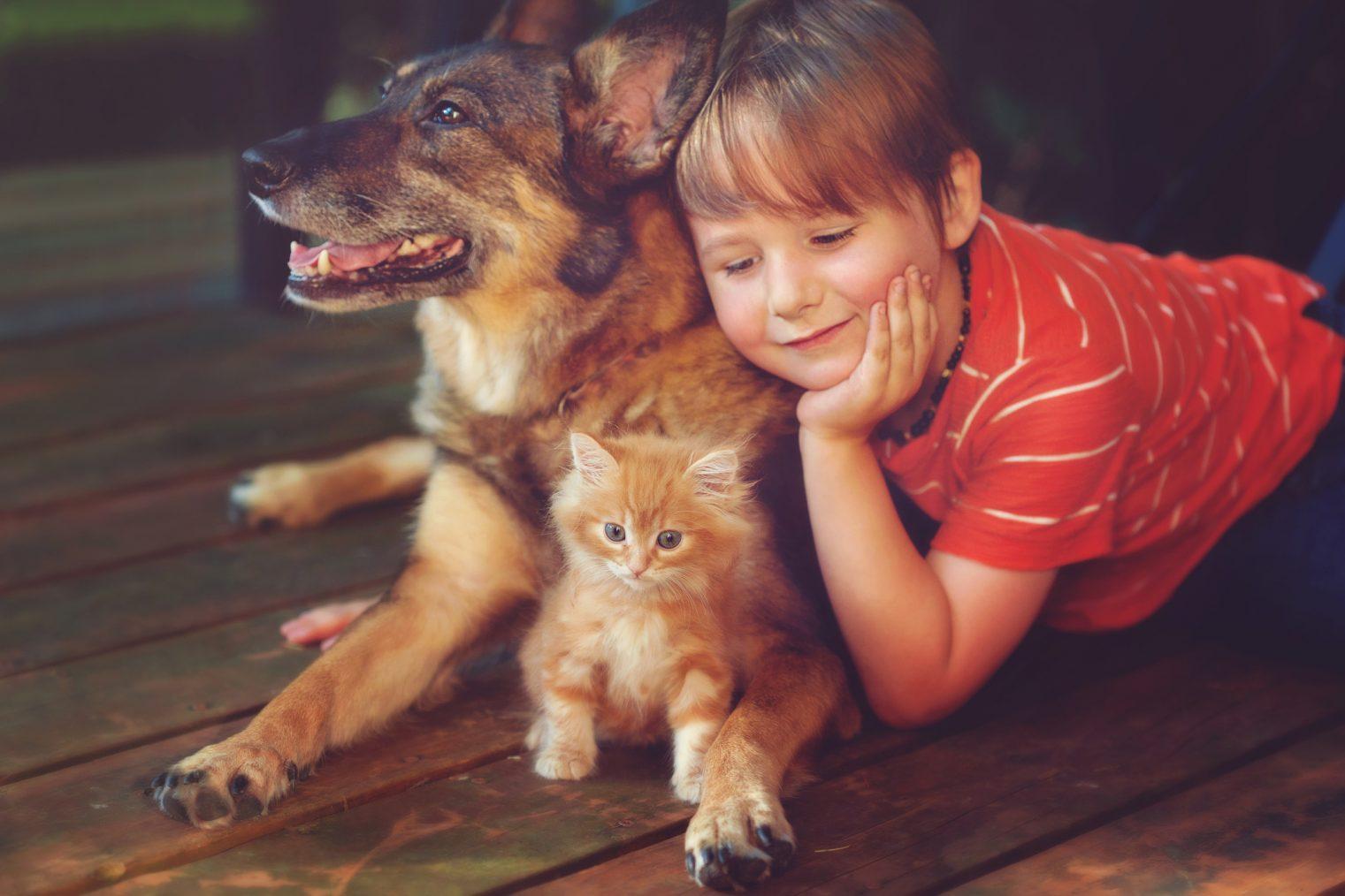 Gatos niños