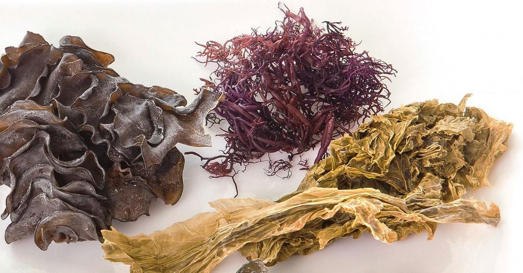 Descubre los beneficios de consumir algas marinas