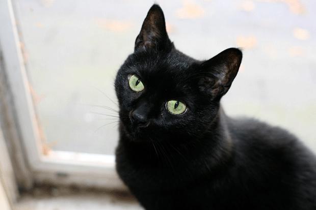 gato-negro-1