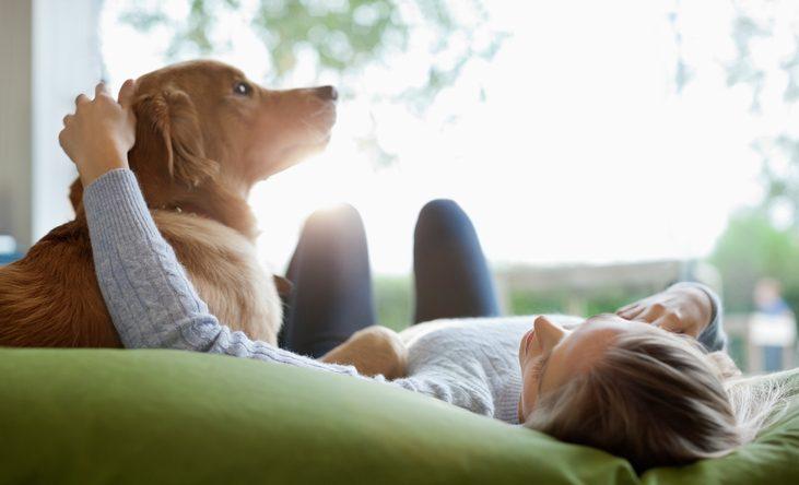 las mascotas pueden darte felicidad