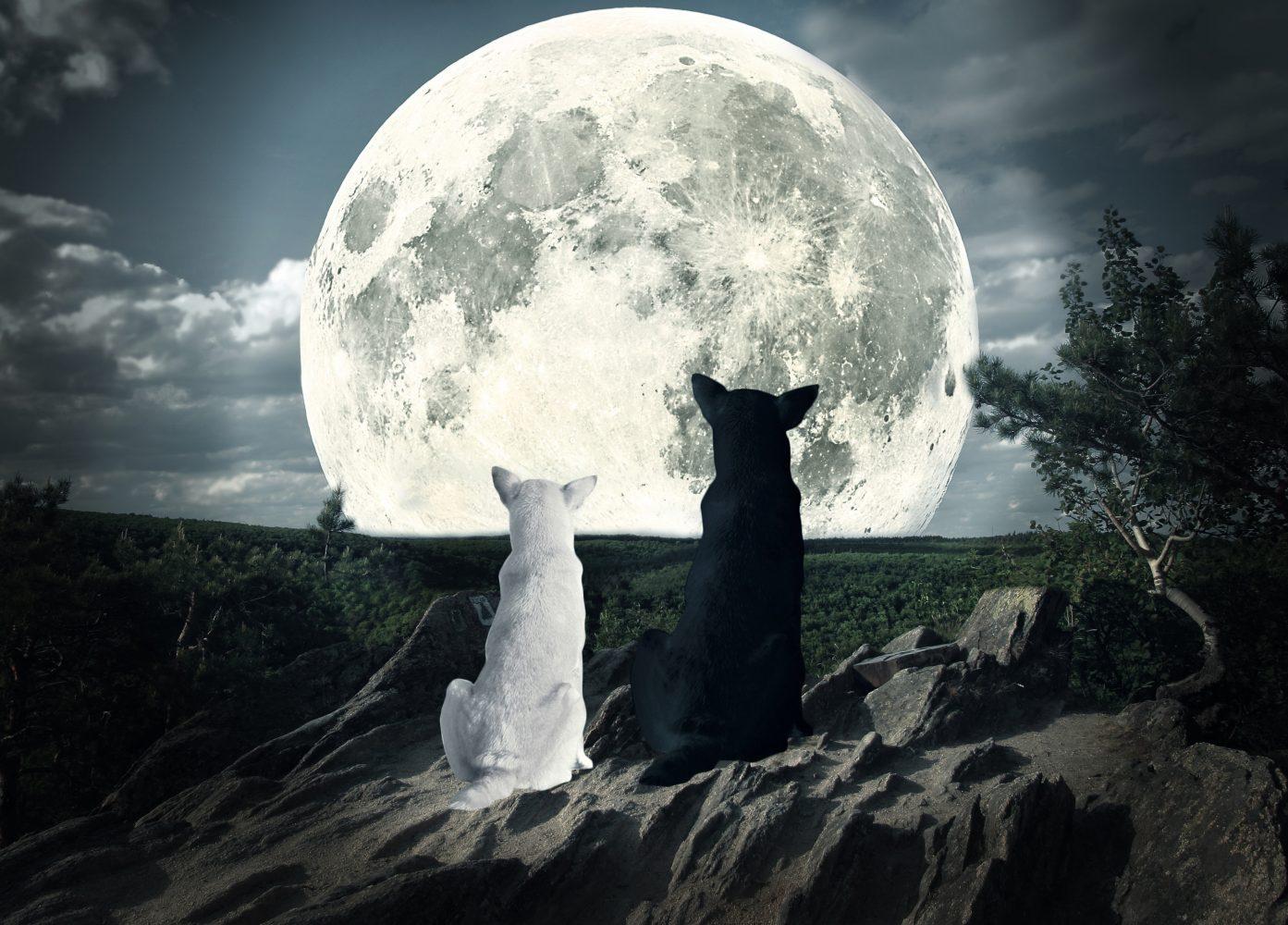 POEMAS SIDERALES ( Sol, Luna, Estrellas, Tierra, Naturaleza, Galaxias...) - Página 26 GettyImages-475129854-e1514897232671