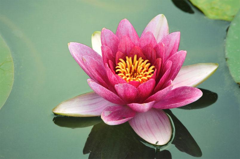 Las Frutas Que Ayudan A Atraer La Suerte Fotos: Estas Son Las 8 Plantas Que Te Ayudan A Atraer El Amor