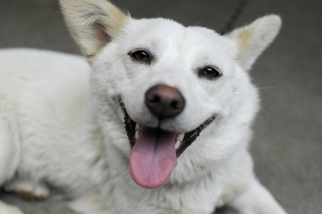 Estudio asegura que los perros entienden lo que le hablan sus dueños