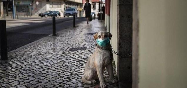 coronavirus y las mascotas colmevet