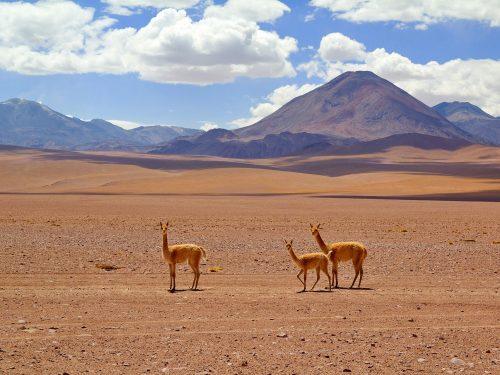 world travel awards desierto de atacama chile