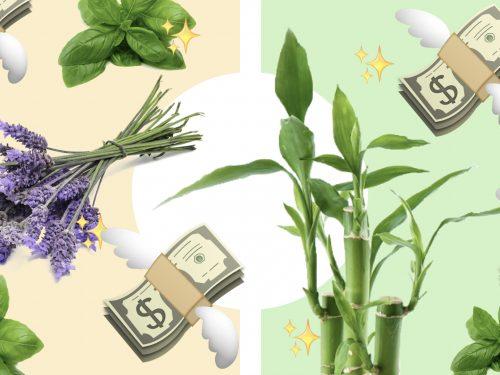 plantas de la suerte