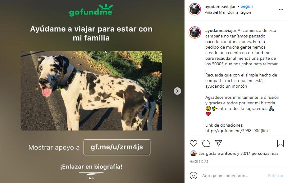 ¡Negaron el vuelo por su peso!: Chilenos desean llevar a su perro a España