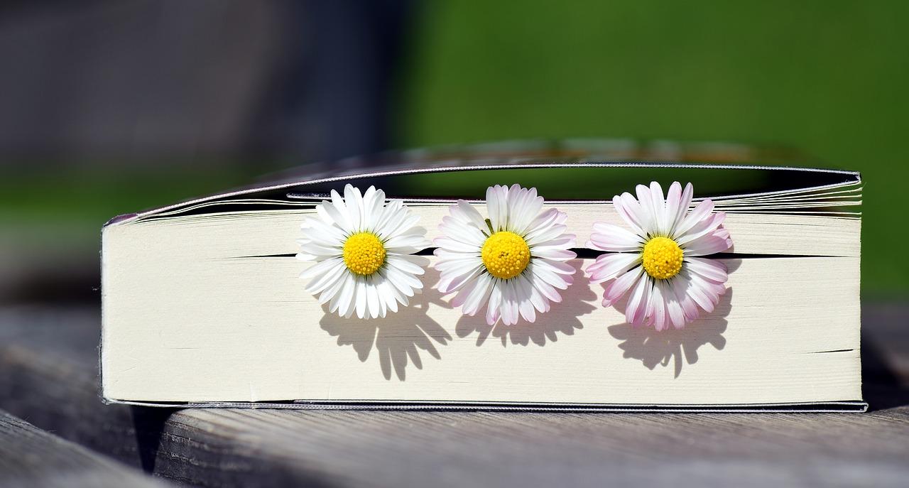 Amor De Libros