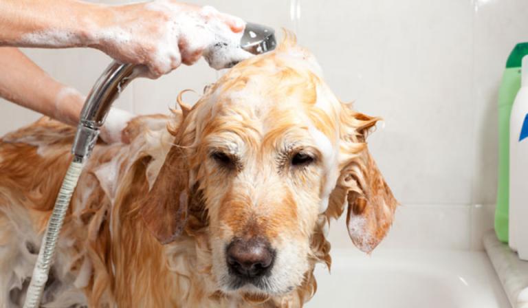 ¿Cada cuánto tiempo debes bañar a tu perro? Tips para cuidarlo en casa