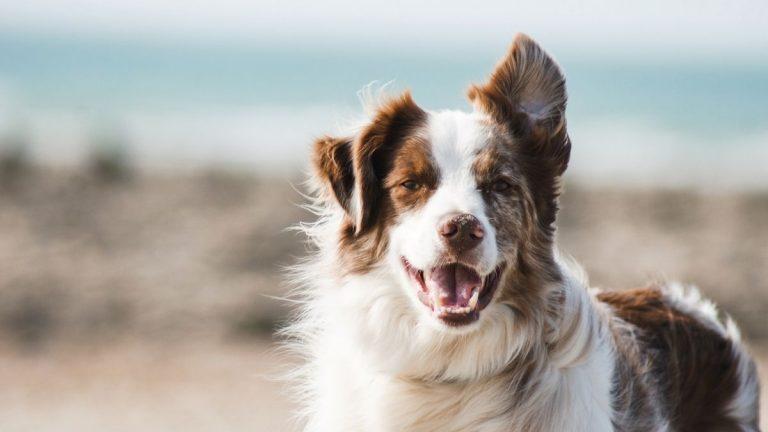 Los Perros Detectan A Las Malas Personas Y La Ciencia Lo Prueba