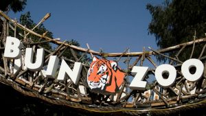 Buin Zoo Y Campaña Para Apadrinar