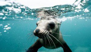 Dia Mundial De Los Oceanos 3