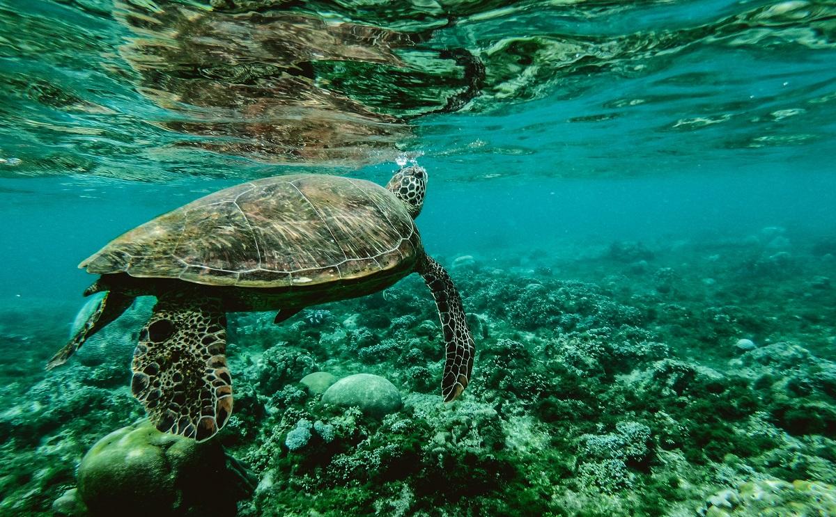 Dia Mundial Oceanos 4