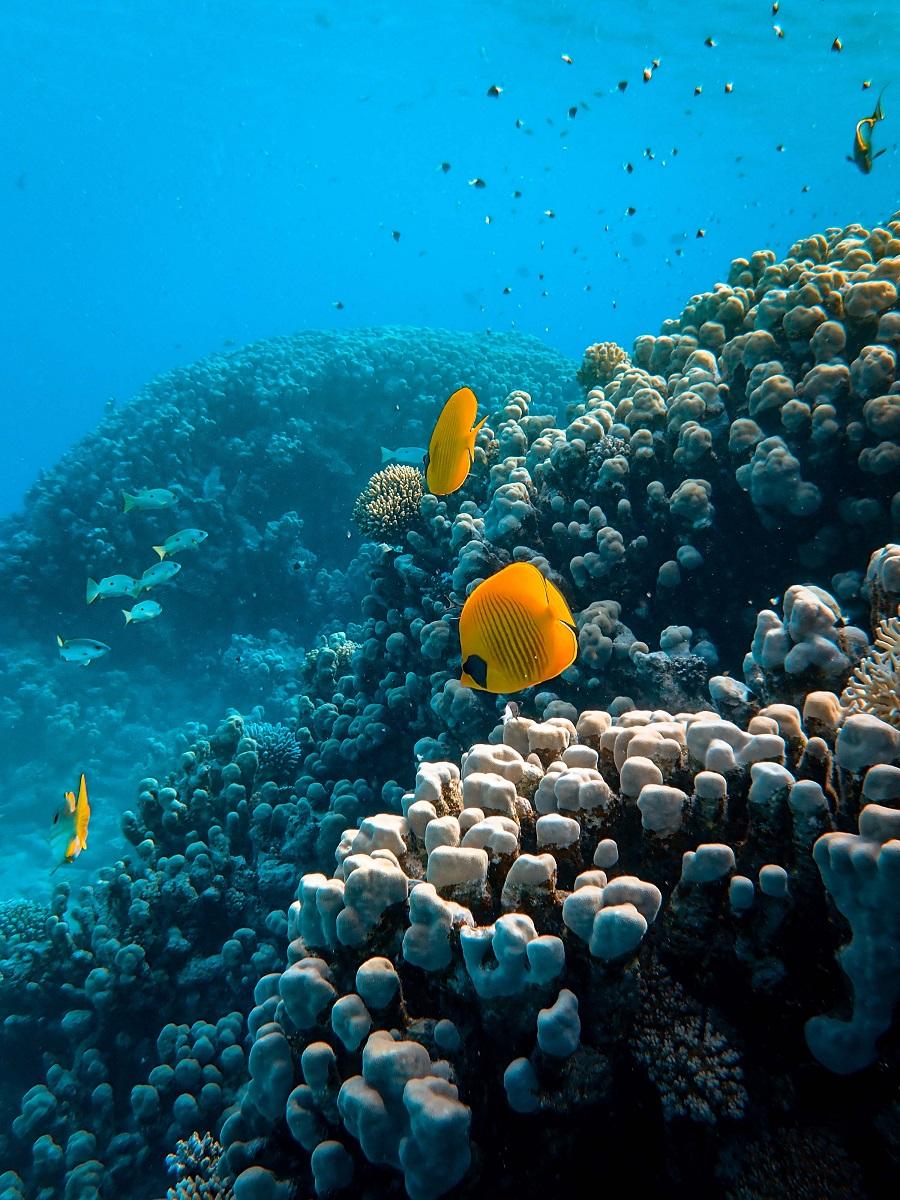 Los Oceanos Y La Produccion De Oxigeno