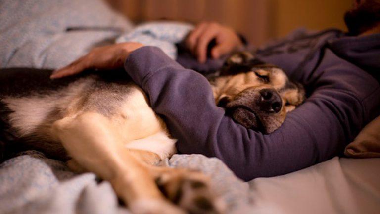 Día Mundial Del Perro - Consejos