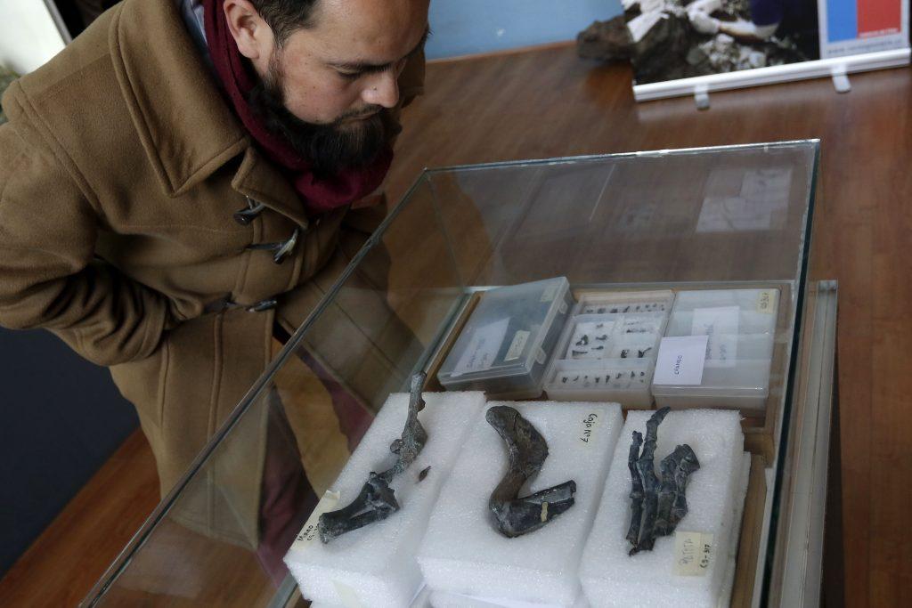 Entregan A Museo Nacional De Historia Natural De Chile Los F—siles Del Chilesaurus Diegosuarez