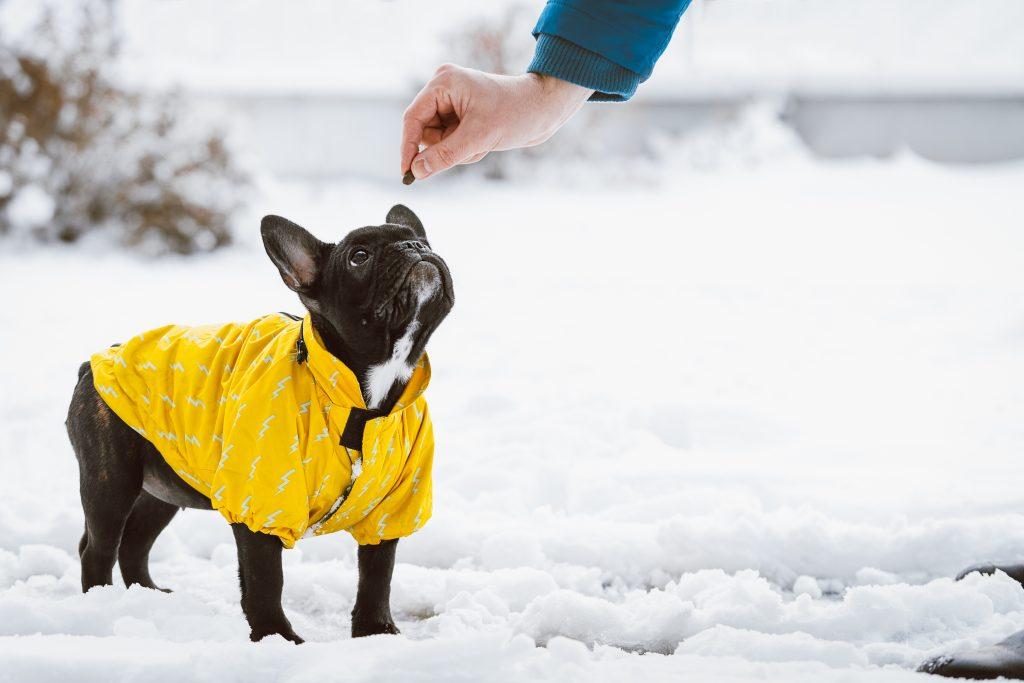 Perrito abrigado en el frío