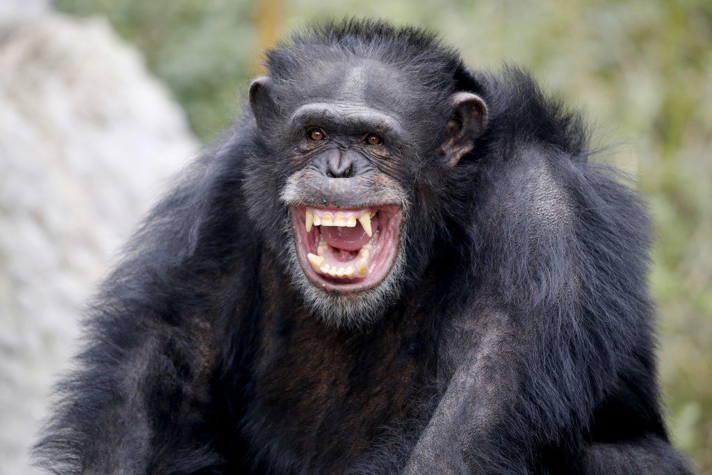 Virus del Mono B en China