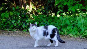 toque de queda para gatos en localidad de australia