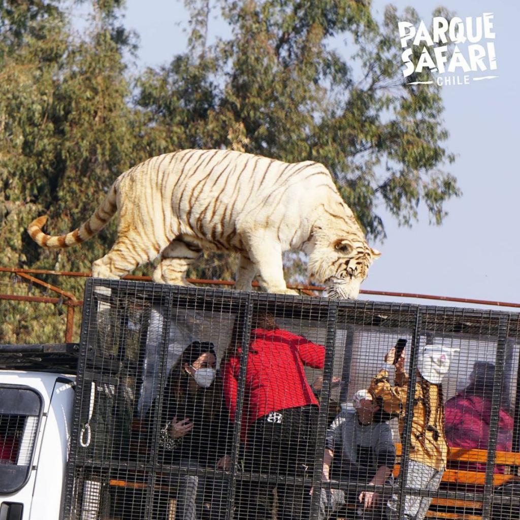 Ataque En Parque Safari