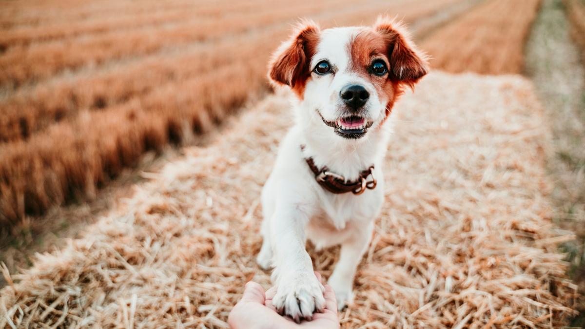Día Internacional Del Perro (3)