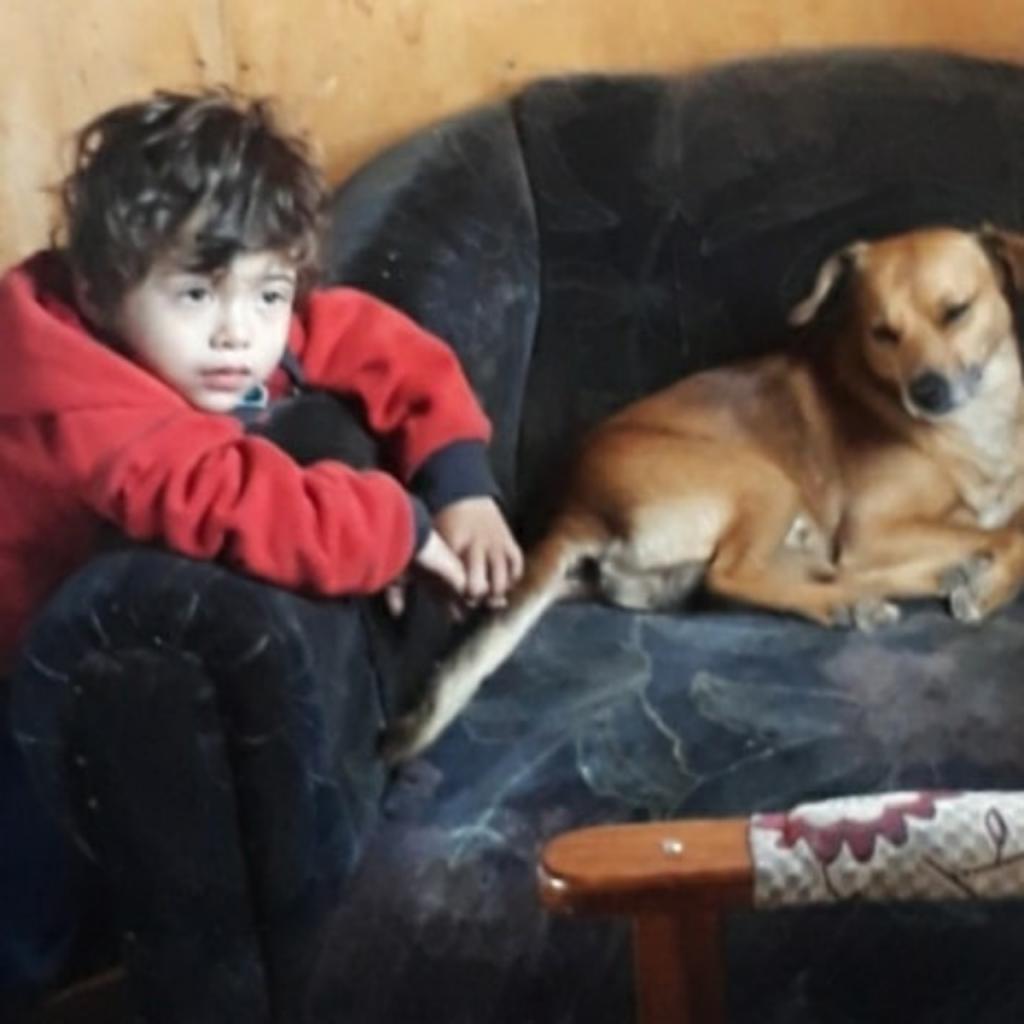 Perro Teddy Ignacio