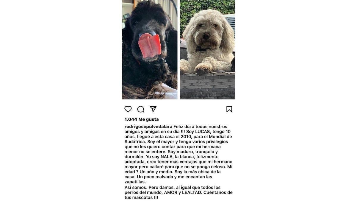 Perros De Rodrigo Sepúlveda
