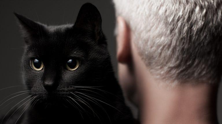 Gatos Humanos Padres