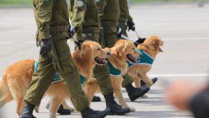 Perritos En Parada Militar