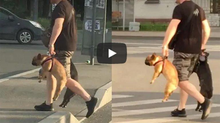 Perros De Video Viral