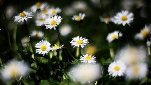 Cuando Parte Primavera