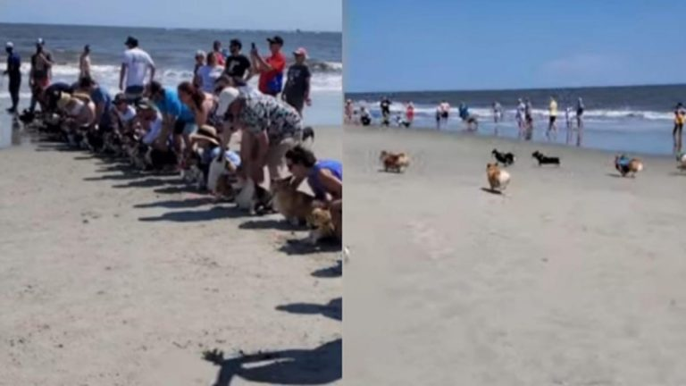 Carrera De Perros Viral En Youtube