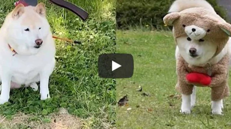 Perro Con Disfraces En Video Viral