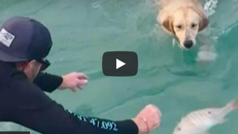 Video Viral De Perro Atrapando A Un Pez